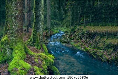Mossy forest river creek view. River creek in forest. Forest creek stream view. Creek in deep forest #1809055936
