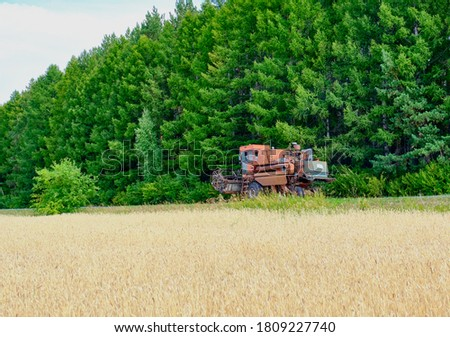 The combine is driving along the edge of a field of ripe wheat against the background of a row of green fir trees #1809227740