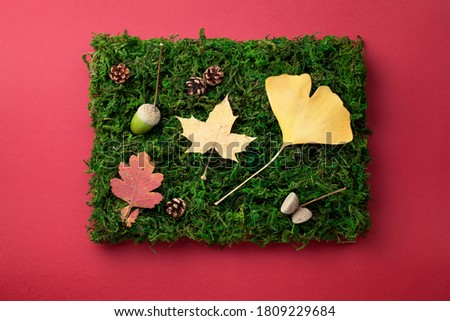 Autumn leaves, cones and acorn on green moss as composition. View from above