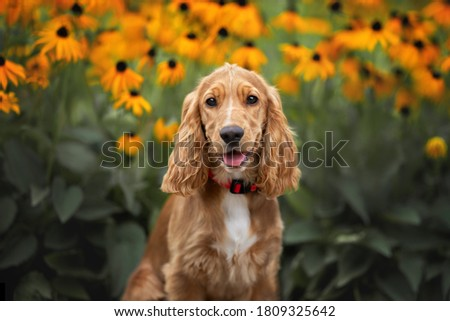 happy english cocker spaniel puppy portrait with blooming flowers in the background Royalty-Free Stock Photo #1809325642
