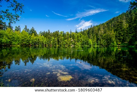 Forest lake water in summer. Lake in summer forest. Forest lake. Lake forest trees landscape #1809603487