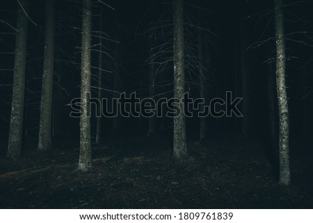 Dark forest at the night. Mysterious and scary atmosphere. Forest with creepy trees.