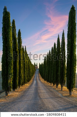 Perfect Road/Avenue through cypress trees - ideal Tuscan landscape Royalty-Free Stock Photo #1809808411