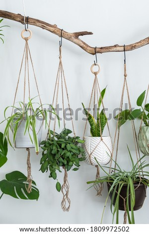 Four jute twine macrame plant hangers are hanging from a driftwood branch. Some of them have wooden rings used as decor to add character to the crafts. A nice variety of plants and pots are used. Royalty-Free Stock Photo #1809972502