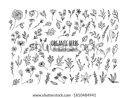 Vector organic herbs. Set with herbs, flowers, Ayurvedic plants, twigs. Design of logos, fabrics, dishes, and clothing. Minimalistic elements for the design of greeting cards, invitations.Organic herb Royalty-Free Stock Photo #1810484941