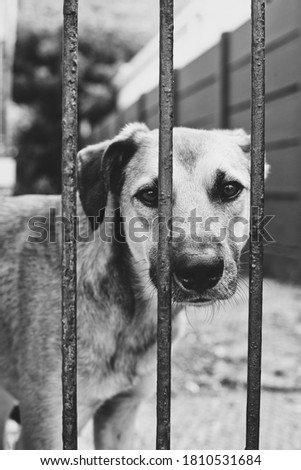 Curious dog behind bars in black and white picture