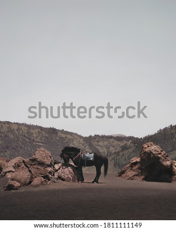 a horse standing on the sand in the bromo area, bromo, east jaga, Indonesia.  #1811111149