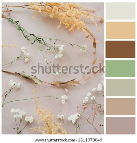 Pastel color palette. Harmonious colour combination.
