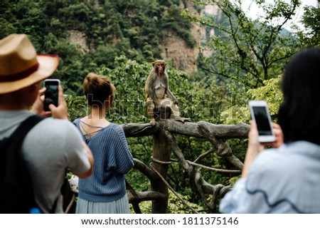A beautiful shot of people taking pictures of a little monkey in a zoo