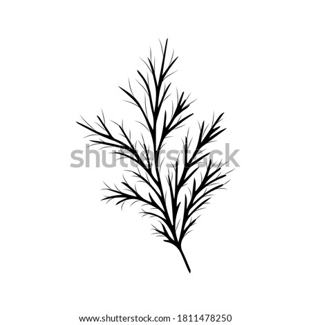 Sketch of a dill branch. Monochrome illustration. Vector doodle isolated element for design. Royalty-Free Stock Photo #1811478250
