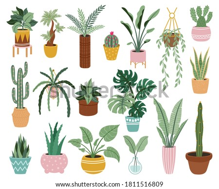Home potted plants. Houseplants in plant pots, flower potted plant, green leaves interior decoration isolated vector illustration icons set. Ceramic containers and vase with aloe, cactus #1811516809
