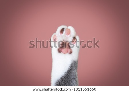 close up of a cat paw with different colored toe beans with copy space Royalty-Free Stock Photo #1811551660