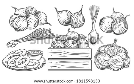 Onion outline drawn monochrome icon set. Pile of onion bulbs, packed in net bag, in wooden crate, bunch of fresh green onions and rings. Vector illustration of harvest vegetables, farm product. Royalty-Free Stock Photo #1811598130