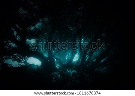 dark forest with scary trees