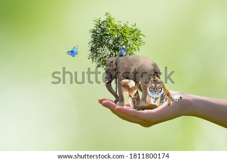 World Animal Day or Wildlife Day concept. Elephant, tiger, deer, parrot and green tree in human hand. Saving planet, protect nature reserve, protection of endangered species and biological diversity. Royalty-Free Stock Photo #1811800174