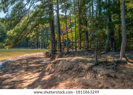 Shoreline erosion at the lake with the sand washed away exposing the roots on the trees with shadows cast on the beach by the bright sunlight through the trees in autumn Royalty-Free Stock Photo #1811863249