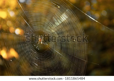 Close-up of spider weaving web in forest. Spider web in sunny forest. spider web in the forest on a bright sunny autumn day Royalty-Free Stock Photo #1811865484