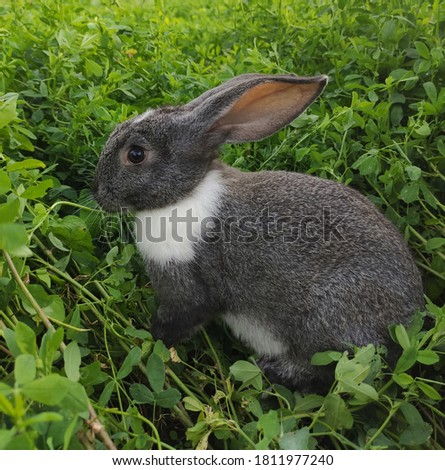 Rabbit. Bunny in the meadow on a summer day. Rabbit close up. Gray rabbit. Animal cute photo. Bunny in the leaves. Animal background. Domestic animal. Animal portrait. Grey bunny. Pretty photo.