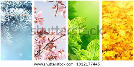 Four seasons of year. Set of vertical nature banners with winter, spring, summer and autumn scenes. Copy space for text Royalty-Free Stock Photo #1812177445