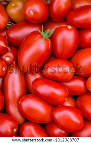 Fresh red tomatoes. Organic vegetables.