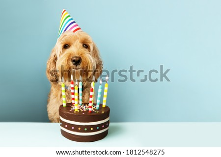 Funny dog with birthday cake and hat Royalty-Free Stock Photo #1812548275