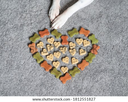 Dog food image, Dog birthday picture, Dog food photos, Animal paws image, Picture of paws, Yummy treats, Cute furry dog paw touching colorful food, Food in a shape of heart