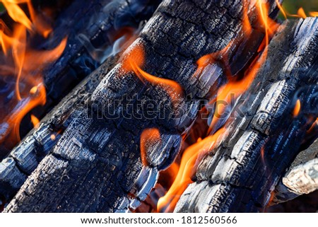 A picture of a flame of fire against a background of charred firewood. Bonfire. The concept of outdoor recreation.