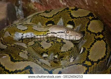Close up picture from a python - zoo photography
