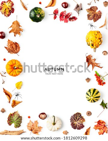Autumn frame. Composition and layout made of colorful fall leaves, pumpkins and berries on white background. Top view, flat lay and copy space. Floral design Royalty-Free Stock Photo #1812609298