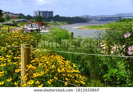 Black Eyed Susans cluster around wooden fence pole on the Memphis Tennessee Riverfront.  Railroad bridge can be seen in background along with Riverboat. #1812650869
