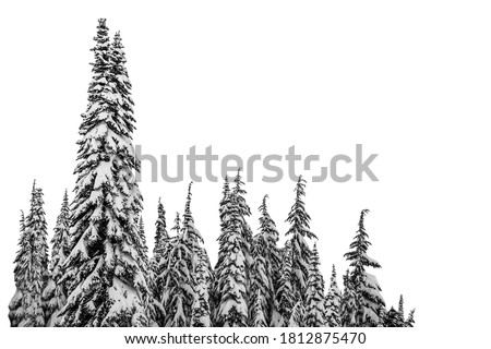 Christmas tree, firs in winter with snow isolated on white background Royalty-Free Stock Photo #1812875470