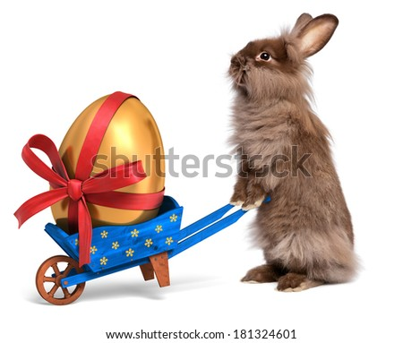 Cute Easter bunny rabbit with a little blue wheelbarrow and a golden Easter egg with a red ribbon, isolated on white, CG and photo