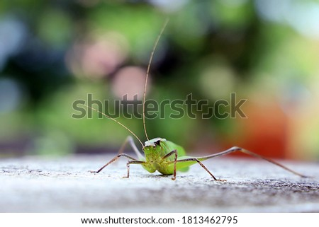 the picture shows a grasshopper which can survive by eating small insects and leaves,thers are many types in them ,this are one kind
