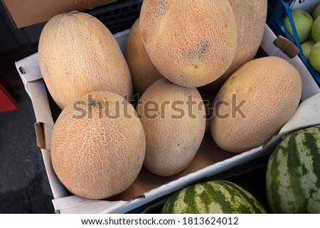 Fresh ripe melons for sale at the open-air vegetable market. High quality photo