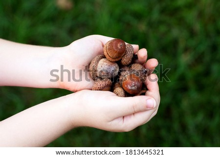 Child's hands with acorns, on a bright green background. Royalty-Free Stock Photo #1813645321