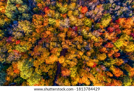 Colorful autumn forest trees top view. Autumn tree tops. Forest trees in colorful autumn fall. Autumn forest trees top view landscape #1813784429
