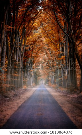 Autumn forest road view. Road in autumn forest. Autumn road view. Autumn forest road #1813864376