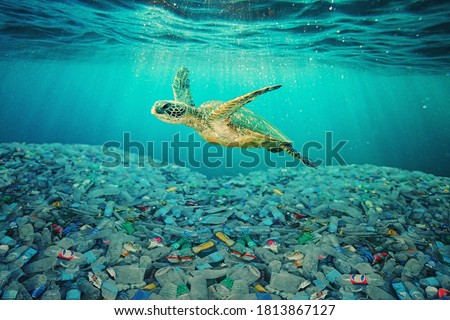 Sea turtle swimming in ocean invaded by plastic bottles. Pollution in oceans concept. Royalty-Free Stock Photo #1813867127