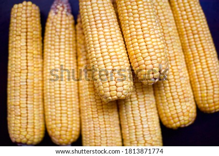 close up view of corn cob. they are unboiled  #1813871774