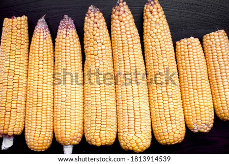 close up view of corn cob. they are unboiled  #1813914539