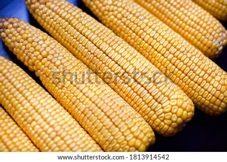 close up view of corn cob. they are unboiled  #1813914542