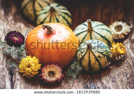 Pumpkins and dried flower. Thanksgiving day or halloween, autumn greeting background. Fall season still life concept Royalty-Free Stock Photo #1813939880
