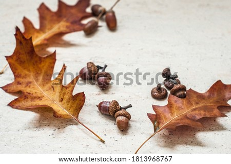 The composition of the three yellowed oak leaves and acorns on different ceramic floor. Royalty-Free Stock Photo #1813968767