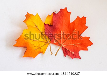 Real autumn leaves on the window. Seasonal photo. Yellow and orange colours with texture. November postcard. White background. COpy space for your text Royalty-Free Stock Photo #1814210237