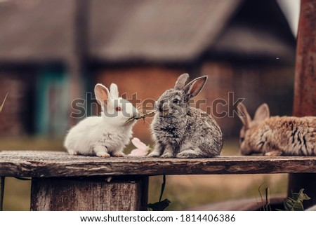 Two rabbits on a bench eating grass