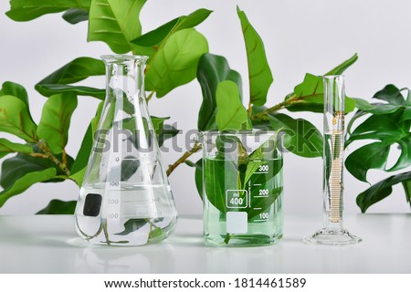 Natural drug research, Plant extraction in scientific glassware, Alternative green herb medicine, Natural organic skincare beauty products, Laboratory and development concept. Royalty-Free Stock Photo #1814461589