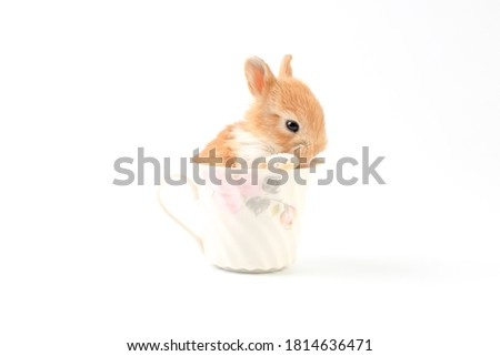Lovely bunny easter baby brown rabbit sitting in beautiful flower coffee cup on white background. Funny relaxing cute fluffy rabbit playful concept.