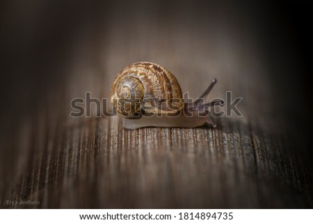 Macro pictures of a snail