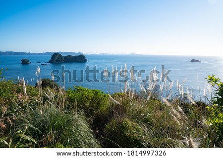 Coastal outlook from carpark for Catherdral Cove walk at Hahei Coromandel New Zealand with papmas grass flowers blowing in breeze.