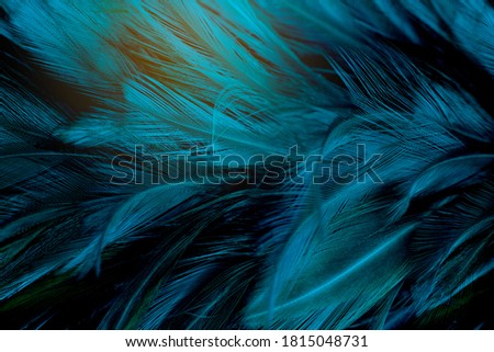 Beautiful dark green blue feather pattern  texture background Royalty-Free Stock Photo #1815048731